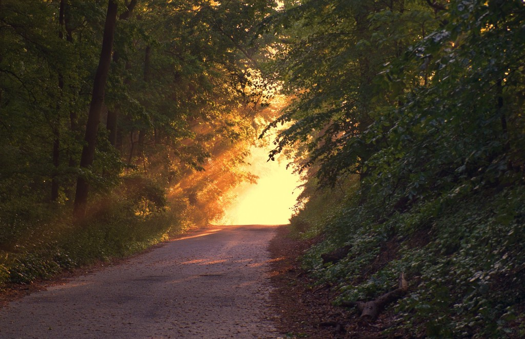 Rezension: Alles Licht, das wir nicht sehen von Anthony Doerr
